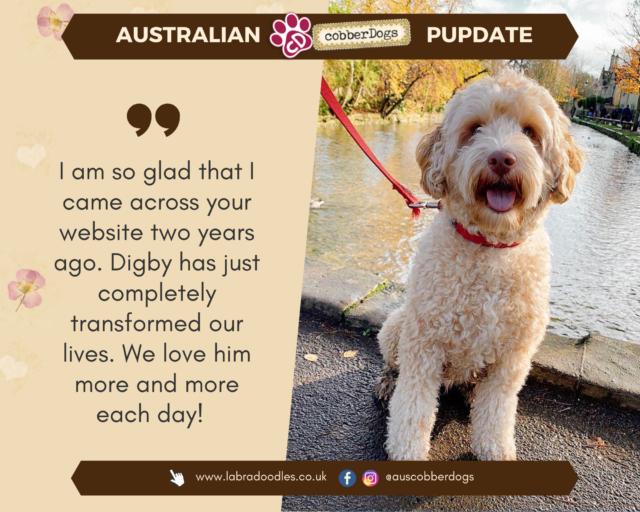doodle dogs testimonial Australian labradoodle