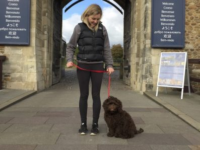 Labradoodle Socialisation Training in the city