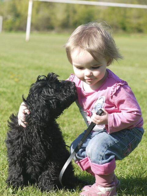 black labradoodle puppy with child