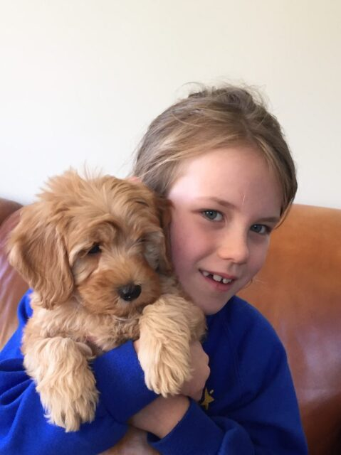 Young girl with her new labradoodle puppy