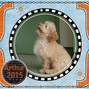 "Arthur is a 100% Australian Service Dog ""ASD"" type of Australian Labradoodle puppy"