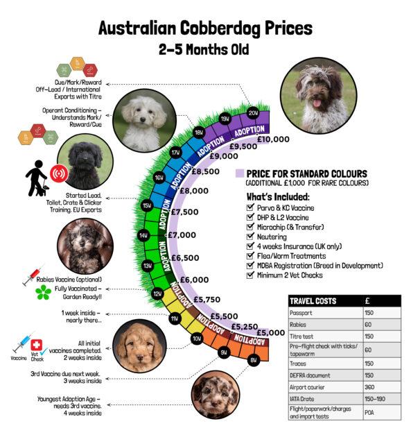 Australian Cobberdog Office