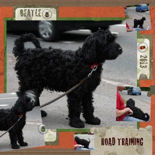 Beattle - Black Australian Labradoodle Puppy - Road Training