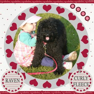 Raven is a black miniature Labradoodle puppy. Her breed is 100% ASD Australian Labradoodle, also known as Australian Cobberdog.