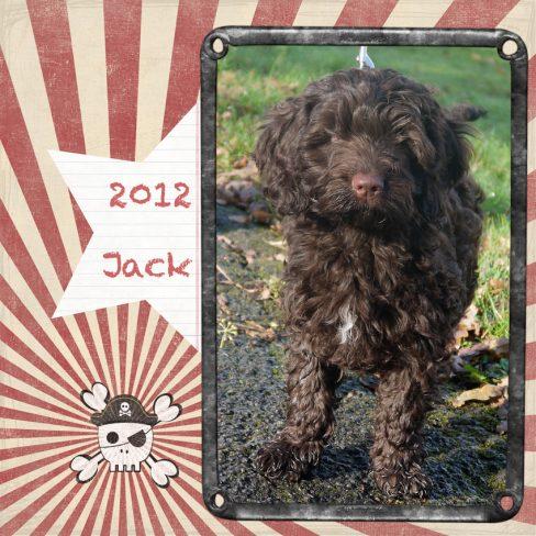 Jack is a 100% Australian Service Dog