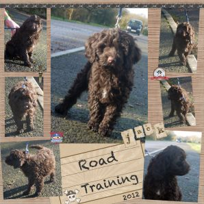 "Jack is a 100% Australian Service Dog ""ASD"" type of Australian Labradoodle"