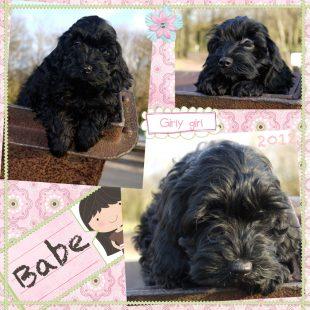 Babe is a 100% Australian Service Dog