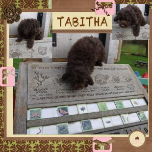 Tabitha is a 100% Australian Service Dog
