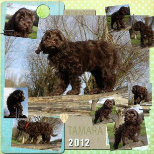 Tamara is a 100% Australian Service Dog