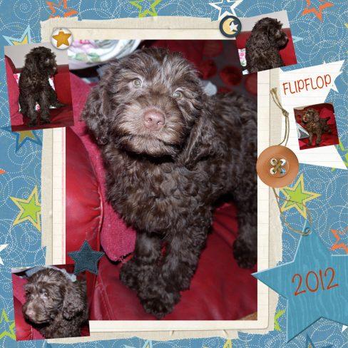 Flipflop is a 100% Australian Service Dog