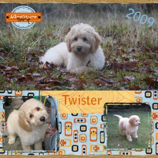 Twister is a 100% Australian Service Dog