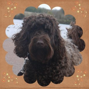 Sophie is a 100% Australian Service Dog