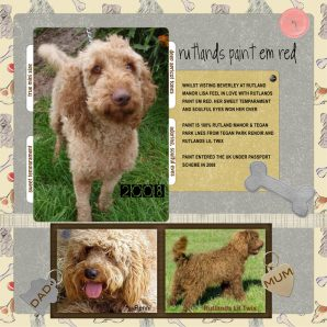 Paint Em Red Australian Labradoodle from Rutland Manor