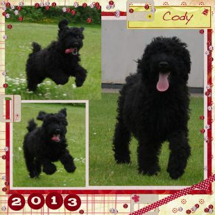 Black Australian Labradoodle in the Park - Cody