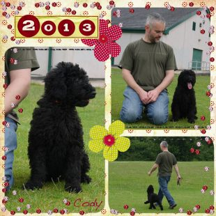 Cody - Medium Black Australian Labradoodle Puppy