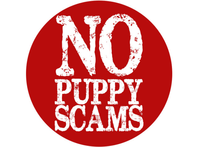 How to Avoid Online Puppy Scams