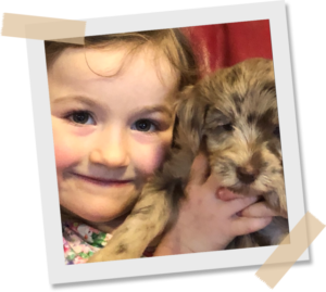 Getting A Labradoodle As A Second DOg