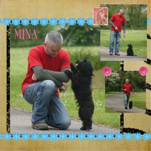 Black Miniature ASD Australian Labradoodle - training with Rhodri
