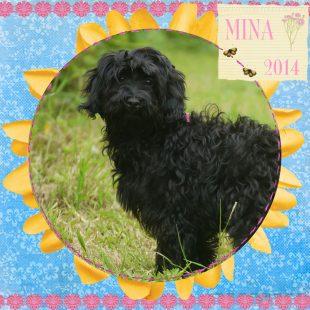 Mini Black ASD Australian Labradoodle