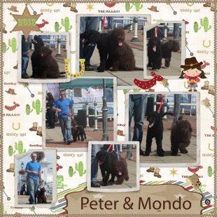 Peter - Medium Chocolate Australian Labradoodle Lead and Socialisation Training