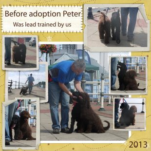 Peter is a 100% Australian Service Dog