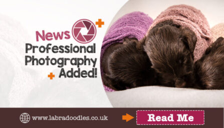 Professional Photography for Dogs
