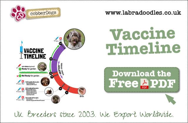 Vaccine Timeline Information
